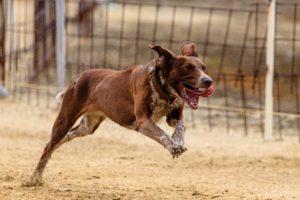 Il mio cane scappa come costruire un recinto per cani for Costruire recinto per cani