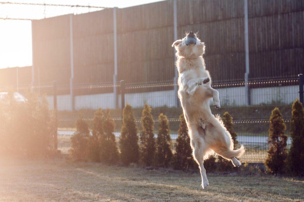 Il Mio Cane Scappa Come Costruire Un Recinto Per Cani Happy Care