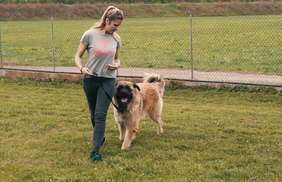 la paseggiata con il cane strutturata