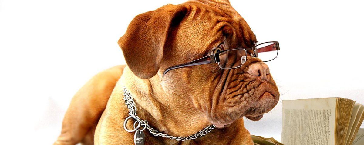 leggi sui cani