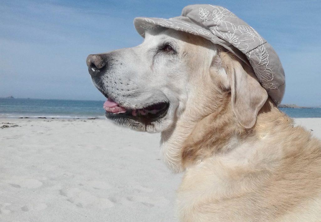 cane in spiaggia con cappello